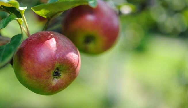 lever detox appel